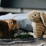 Basso desiderio sessuale: Cause e cura del basso desiderio sessuale